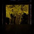 Photos: 新宮熊野神社長床 夜