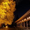 新宮熊野神社長床 大イチョウ