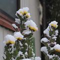 写真: タワー雪