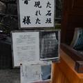 18-8-天草~熊本城0087