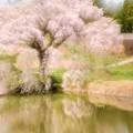 写真: 春の歌