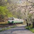 写真: 儚 春