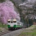 Photos: 春朝紀行