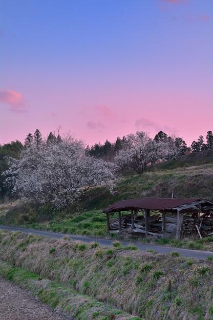 隈々に残る寒さや梅の花