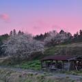 Photos: 隈々に残る寒さや梅の花
