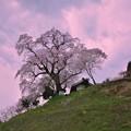 Photos: 春哮ル