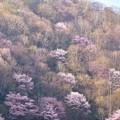 Photos: 山笑ふ