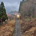 Photos: 冬枯ル