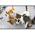 Photos: 竹富島のネコ達