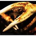 Photos: 水族館でカニ