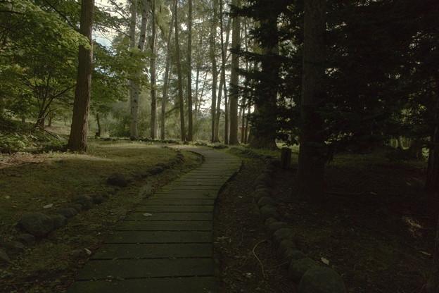 森のにおい