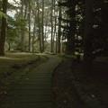 Photos: 森のにおい