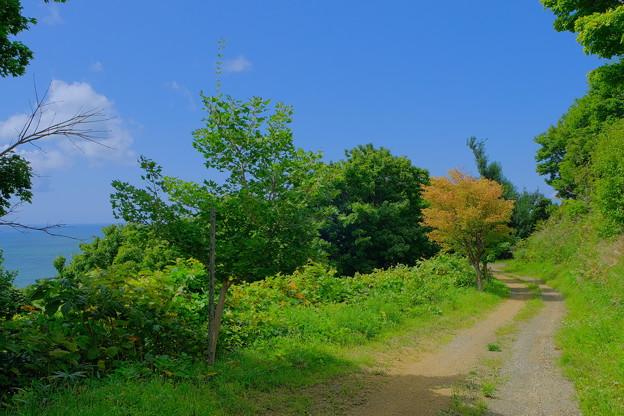 Photos: 海沿いの小道