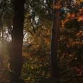 染まりかけの森