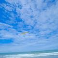 海と空と鳥