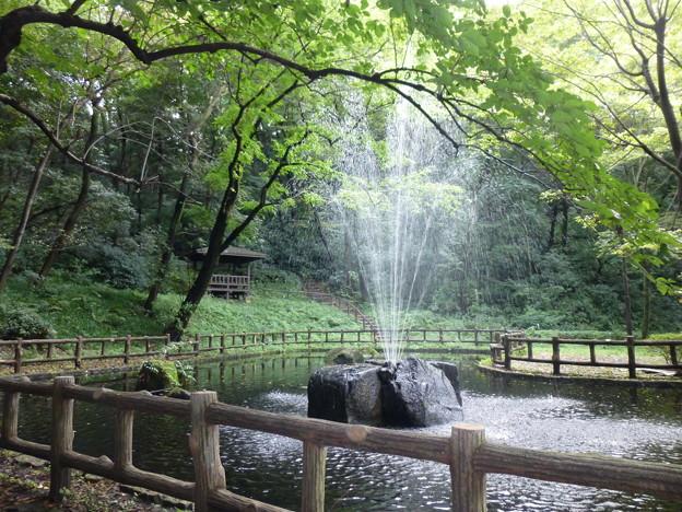 獅子ヶ谷市民の森の噴水@横浜20150926