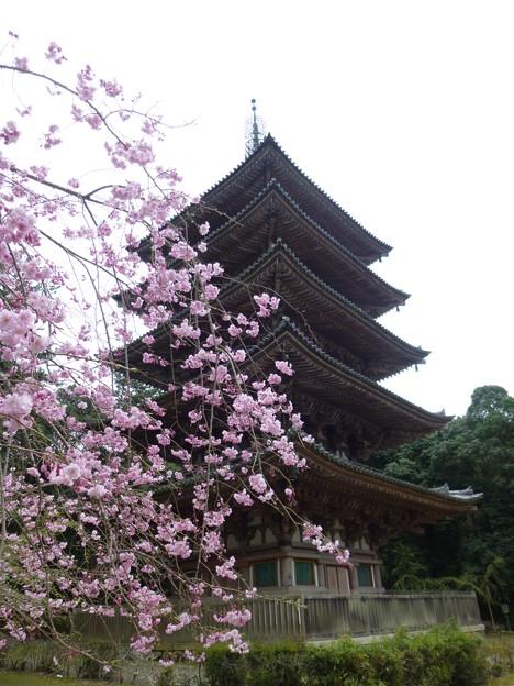 醍醐寺の五重塔と枝垂桜@京都20160403