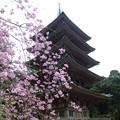 Photos: 醍醐寺の五重塔と枝垂桜@京都20160403