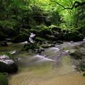写真: 渓流2