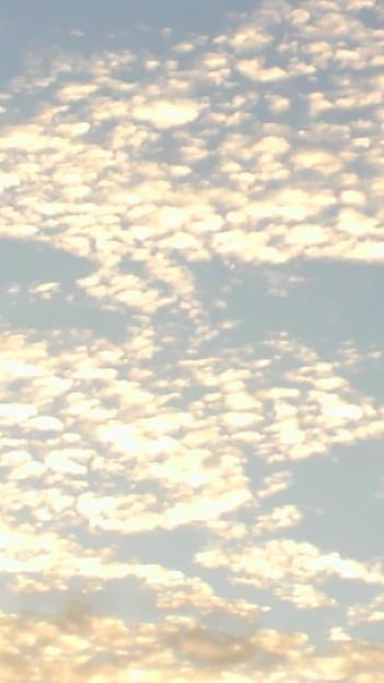 夕焼け空のうろこ雲〓