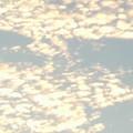Photos: 夕焼け空のうろこ雲〓