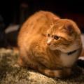 写真: 背景に融けそうな猫(爆)
