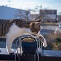 Photos: よっこらしょ