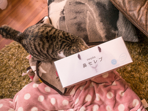 Photos: ウサギ猫(爆)
