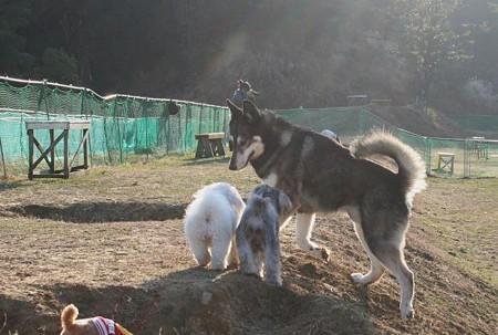 いぬ、犬、イヌ。