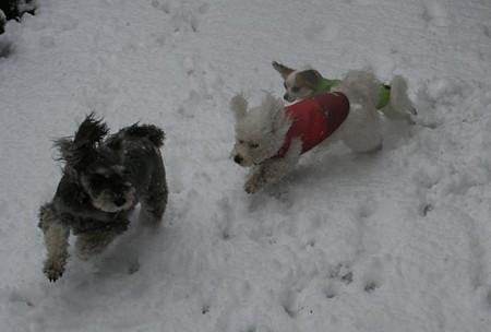 雪だ雪だ♪