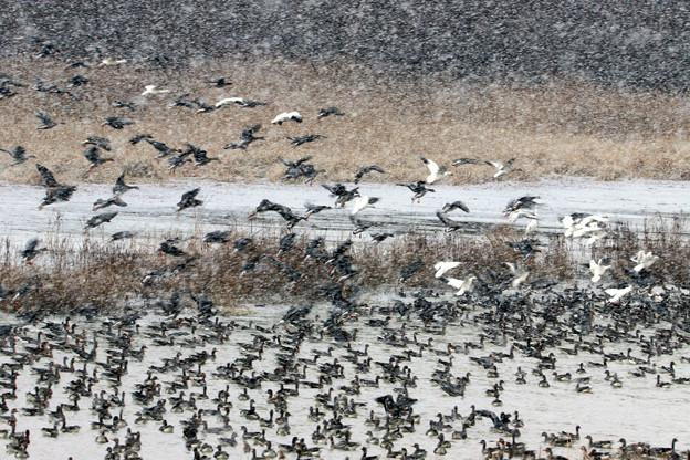 雪 長沼用水路-4