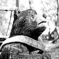 Photos: 熊の森ミュージアムに行ってきました