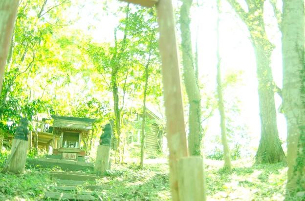 Photos: 参拝