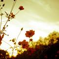 写真: 夕晴