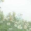 Photos: 心象スケッチ…あきうらら