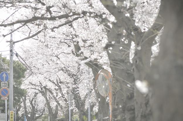 Photos: Tokyo landscape...次の春は…