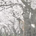 Tokyo landscape...次の春は…