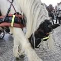 Photos: cheval