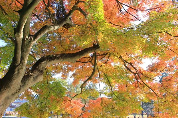 紅葉 最上公園