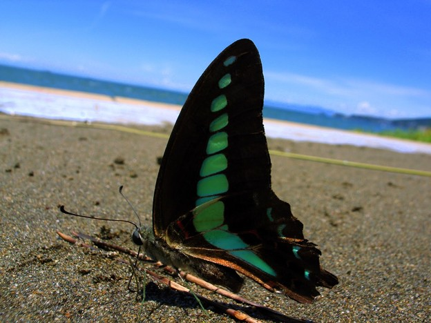 Butterfly on the beach
