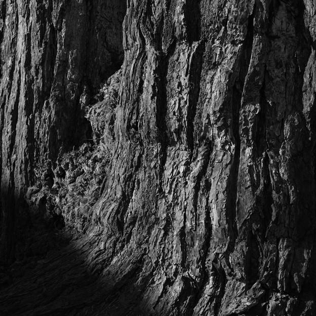 Photos: tree