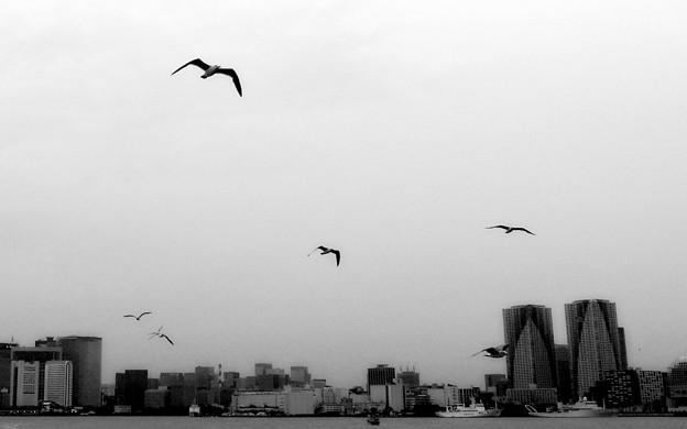 sea gull   Tokyo