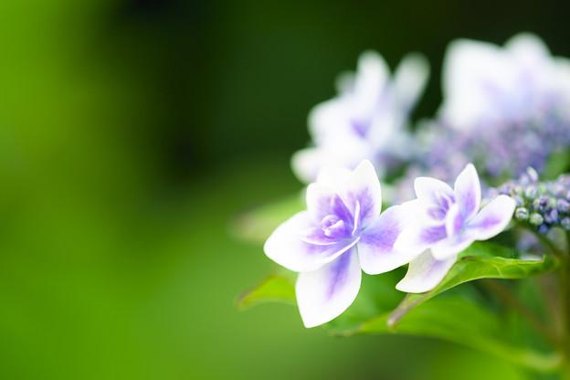 写真: 記憶の中に咲く