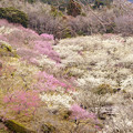 Photos: 人里の春