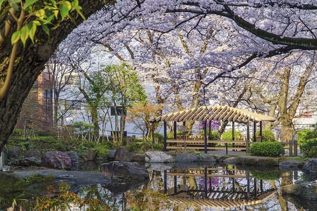 池と桜と休憩所と
