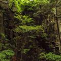 Photos: 滝へ続く崖