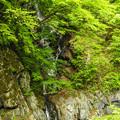 Photos: 釜沢の滝 つり橋から