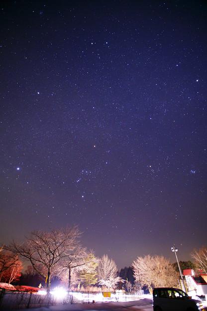 冬の桜と星空と