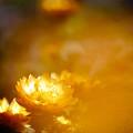 Photos: オレンジ色に染まる