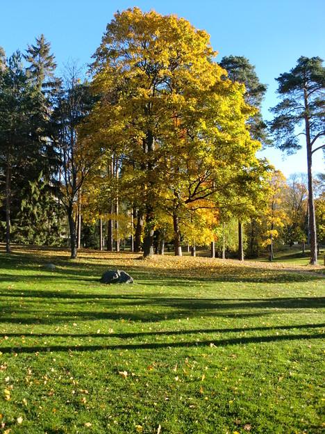 公園の樹木